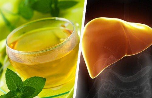 Bebida feita da planta que ajuda o fígado