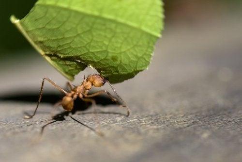 Repelir-as-formigas-com-limao