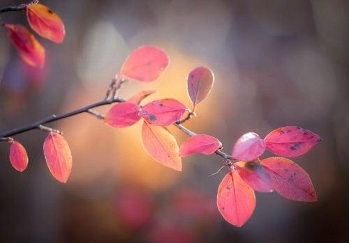 Folhas de outono representando o passar do tempo