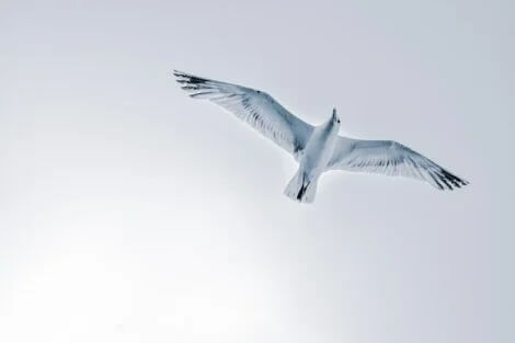 Você pode voar quando alguém o aproxima do abismo