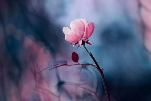 Flor representando a autoestima