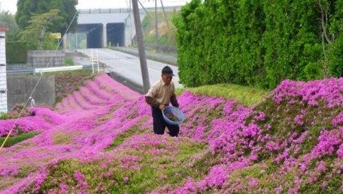 Japonês plantando flores