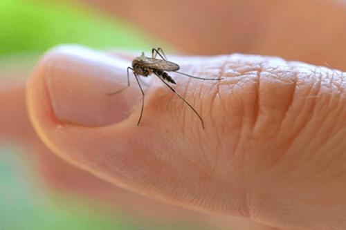 OMS declara emergência sanitária global devido ao zika vírus