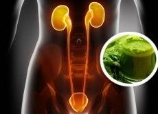 Água de salsa para os rins