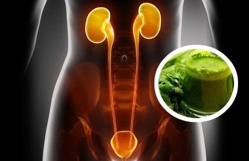 Purifique seus rins com água de salsa