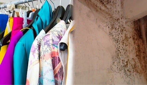 Tire o cheiro de mofo das roupas com alguns truques econômicos