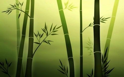 Bambus representando a resiliencia