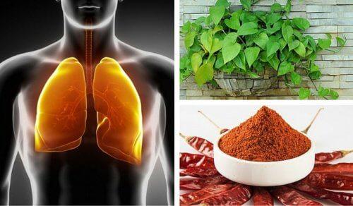 Como fazer uma depuração dos pulmões e brônquios?