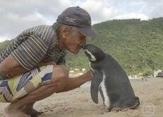 Homem que salvou pinguim