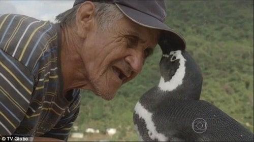 Pinguim resgatado