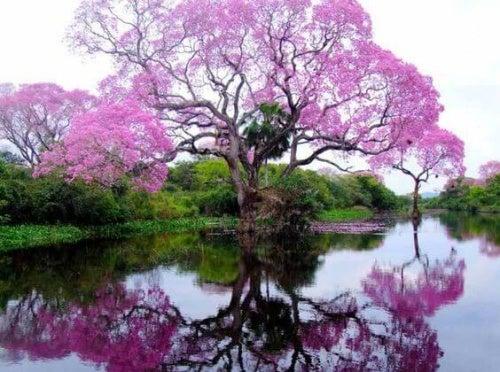 árvore-charmosa