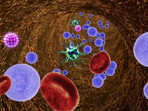 Limão ajuda o sistema imunológico