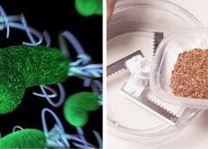 Com estes dois ingredientes você limpará seu corpo de parasitas