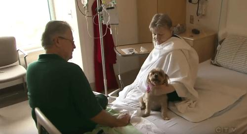Hospital onde é permitido que os animais visitem seus donos