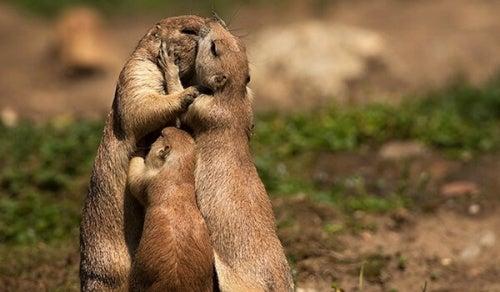Animais se beijando