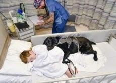 Mahe o cãoterapeuta