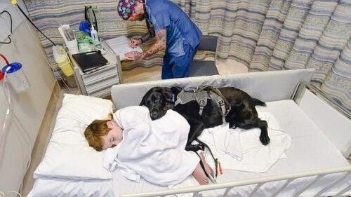 Mahe, o cão e amigo que cuida de crianças com autismo