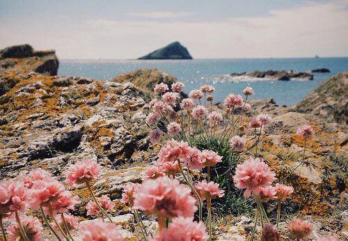 paisagem_com_flores