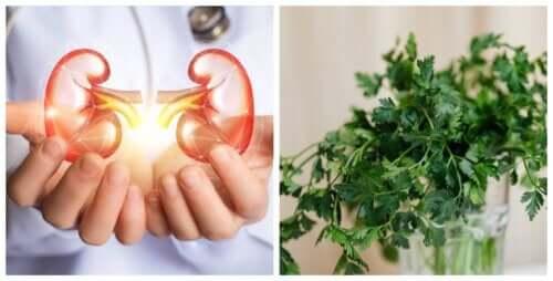 Ajude a purificar seus rins com água de salsa
