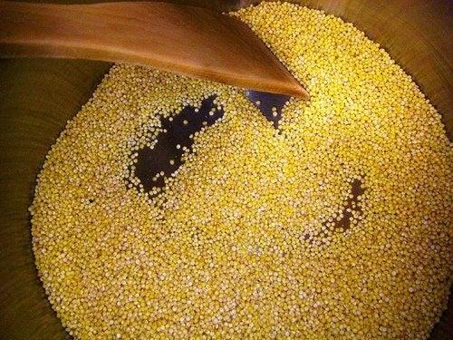 Os benefícios do milho-miúdo, o único cereal alcalinizante