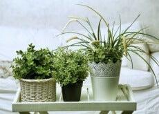6 plantas ideais para ter em seu quarto
