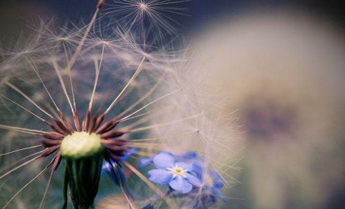 dente-de-leão-com-flor-azul-representando-o-vazio
