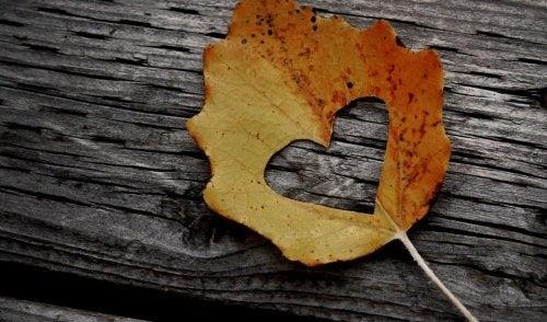 folha-outono-coração