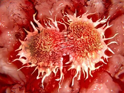 Células de câncer de cólon