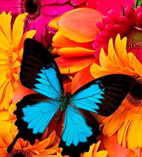 borboleta-de-cores