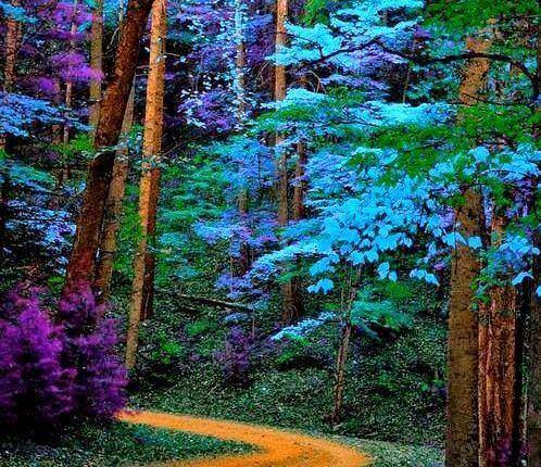 bosque-de-cores