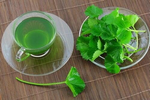 Chá contra a colite ulcerosa