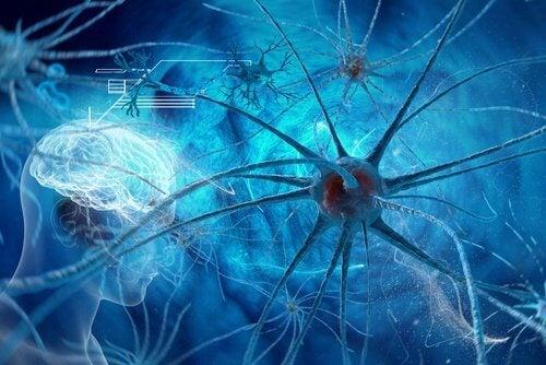 cérebro-explica-atração