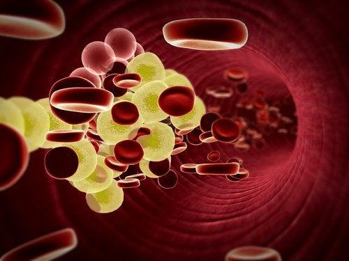 Azeite de oliva e limão favorecem o controle do colesterol