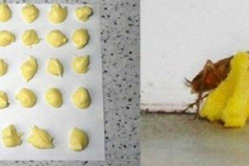 Veneno de ácido bórico e ovo para matar baratas