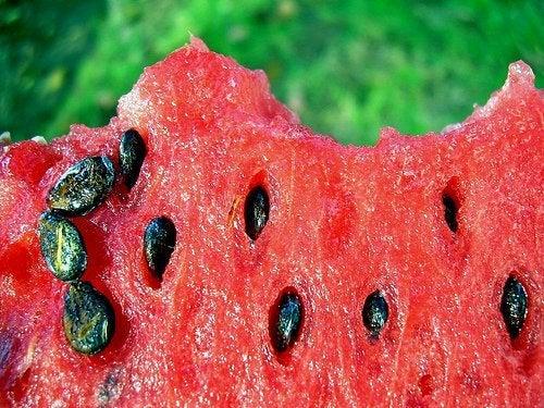 beneficios-sementes-de-melancia