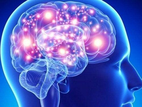 Um bom sono ajuda o cérebro