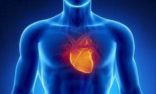 Coração de uma pessoa com ataques de ansiedade