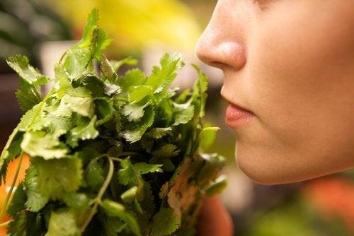 cheiro-alimentos