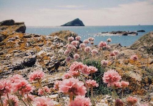 Paisagem-com-flores