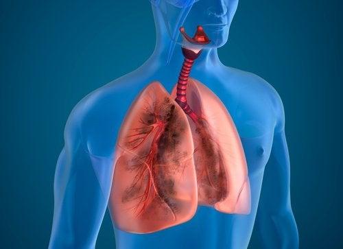 10 ingredientes naturais que purificam os pulmões de um fumante