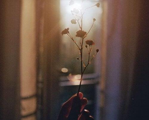 Flor tentando crescer
