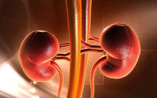 consequencias-segurar-vontade-urinar-calculos-renais