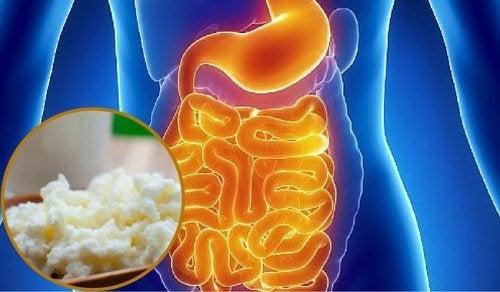 Síndrome de supercrescimento bacteriano no intestino: sintomas e alimentação