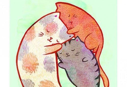 Gatos se abraçando em sua casa