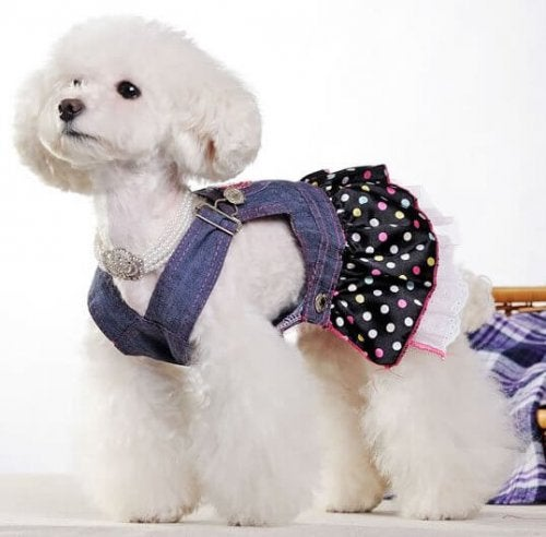 roupa-cachorro-jeans