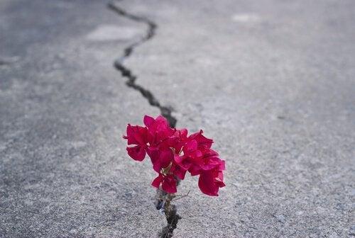 flor-representando-força-e-resiliência