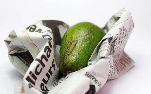 abacate-jornal