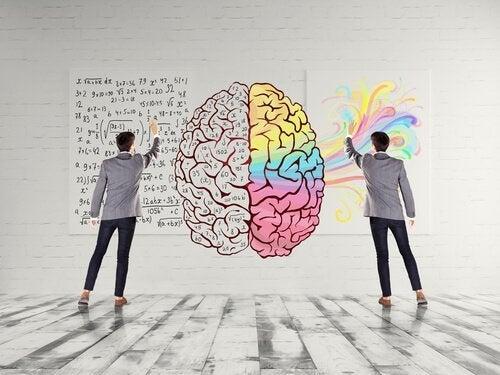 cerebro-jovem