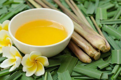 Óleo de citronela: um bom repelente de mosquitos, piolhos e pulgas