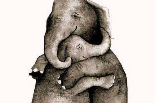 Elefantes se abraçando e compartilhando a vida